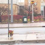 Flowers set at the scene of the accident. Photo by Brandon Martinez   Web Editor